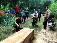 Khởi tố 3 đối tượng rủ nhau lên rừng khai thác gỗ