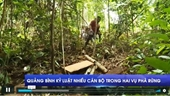 Quảng Bình kỷ luật nhiều cán bộ trong hai vụ phá rừng