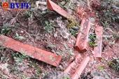 Khởi tố vụ án vườn Quốc gia Phong Nha- Kẻ Bàng bị xẻ thịt