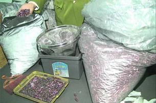 39 năm tù cho những kẻ chủ mưu làm thuốc chữa bệnh ung thư từ bột than tre
