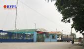 Lợn sữa trong vùng dịch ùn ùn về nhà máy chế biến ở Ninh Giang - Hải Dương