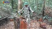 Cận cảnh rừng tự nhiên ở Đắk Nông đang bị tàn phá nghiêm trọng