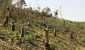 Khởi tố 4 cán bộ Ban quản lý rừng phòng hộ gây thất thoát hơn 750 triệu đồng