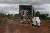 Phát hiện một ổ dịch tả lợn châu Phi tại Đắk Lắk