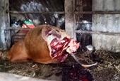Kẻ trộm vào tận chuồng xẻ thịt bò mang thai