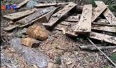 Rừng Đăk Nông bị tàn phá nghiêm trọng Các cơ quan chức năng đang ở đâu