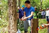 Đã bắt được kẻ chủ mưu đầu độc hơn 10ha rừng thông tại Lâm Đồng