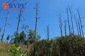 Lâm Đồng ra công điện khẩn sau khi xảy ra nhiều vụ phá rừng nghiêm trọng