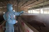 Thêm địa phương công bố bệnh dịch tả lợn châu phi