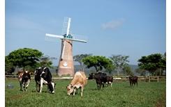 Vinamilk tiếp tục là thương hiệu được chọn mua dẫn đầu ở cả thành thị và nông thôn
