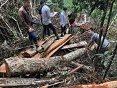 Khởi tố, bắt 3 đối tượng phá rừng nghiêm trọng
