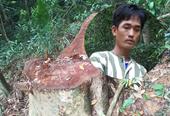 Vụ phá rừng quy mô lớn Khởi tố, bắt tạm giam 1 đối tượng