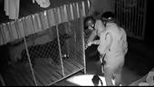 """Trộm 2 con chó quý nặng gần 1 tạ, 4 """"cẩu tặc"""" mang trả khổ chủ thì bị bắt"""