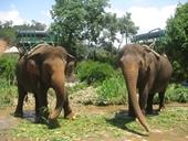 Thực hư chuyện voi và động vật tại Khu du lịch Prenn bị ngược đãi