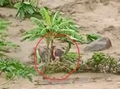 Hãi hùng cảnh tượng người phụ nữ đứng giữa dòng lũ quét ở Thanh Hóa