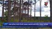 Lâm Đồng khởi tố bắt giam 6 người đầu độc rừng thông