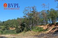 Phát hiện vụ đầu độc thông ba lá quy mô lớn tại Đà Lạt