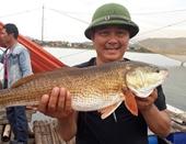 Câu được con cá nghi cá sủ vàng quý hiếm