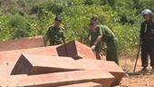Lâm tặc thuê Thôn trưởng vào rừng khai thác gỗ lậu cực khủng