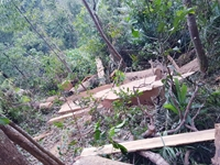 Chùm ảnh hiện trường vụ  Lâm tặc thuê Thôn trưởng vào rừng khai thác gỗ lậu cực khủng