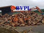 Kiểm lâm đau đầu vì nhà máy gỗ dăm ngay vùng lõi rừng bị phá