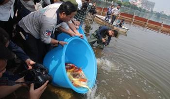 Thả cá Koi Nhật Bản xuống sông Tô Lịch và Hồ Tây để minh chứng chất lượng nước