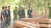 Vụ lâm tặc thuê Thôn trưởng vào rừng khai thác gỗ lậu Bắt tạm giam 4 đối tượng
