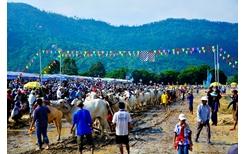 Tưng bừng Lễ hội đua bò Bảy Núi cùng Number 1 Cola