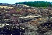 Dừng dự án phong điện ngàn tỉ để làm rõ việc 140ha rừng bị phá