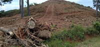 Vụ đồi Núi lửa bị san ủi trái phép UBND tỉnh Lâm Đồng yêu cầu điều tra