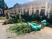 Công an phát hiện hơn 2 000 cây cần sa trồng trong rẫy