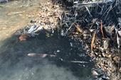 Vụ nước sạch Sông Đà bốc mùi khó chịu Tiếp tục lấy thêm 10 mẫu nước để xét nghiệm