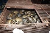 Truy tố 12 bị can buôn bán, vận chuyển 215 cá thể tê tê Java