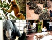 Xử lý với Tội vi phạm quy định về bảo vệ động vật nguy cấp, quý, hiếm