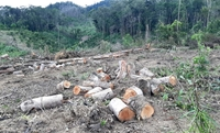 Phá rừng nghiêm trọng tại Lâm Đồng Yêu cầu chấn chỉnh việc kiểm điểm trách nhiệm chiếu lệ