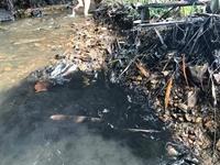 Dấu hiệu pháp lý của Tội gây ô nhiễm môi trường