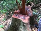 Khởi tố nguyên Trạm trưởng Trạm bảo vệ rừng