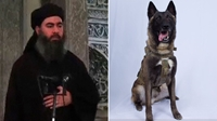 Mỹ công bố ảnh chú chó truy đuổi trùm khủng bố al Baghdadi đến đường cùng