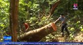 Nguyên Trạm trưởng bảo vệ rừng tại Quảng Bình bị khởi tố