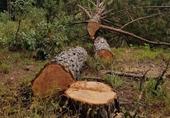 Lâm Đồng yêu cầu điều tra 2 vụ phá rừng nổi cộm