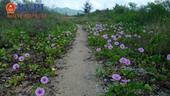 """Cận cảnh gần 10 ha đất """"vàng"""" ven biển trung tâm TP Nha Trang bị bỏ hoang"""
