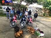 VKS phê chuẩn lệnh bắt người bị giữ trong trường hợp khẩn cấp với nhóm trộm chó