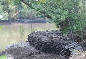 Nhiều thiếu sót trong quản lý, sử dụng đất Rừng phòng hộ huyện Cần Giờ