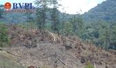 Yêu cầu điều tra vụ hơn 1,7 ha rừng tự nhiên tại Lâm Đồng bị phá
