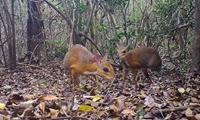 Phát hiện sinh vật quý tại Nha Trang ngỡ đã tuyệt chủng