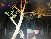 Người phụ nữ 9x treo cổ tử vong trên cành cây ổi