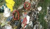 Lợn dịch tả Châu phi lấp ở bãi rác gần khu dân cư ở Thanh Hóa