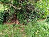 Phát hiện thi thể người bị mất đầu trong vườn điều ở Bình Phước