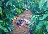 Diễn biến mới vụ giết người phụ nữ giấu thi thể trong rẫy cà phê