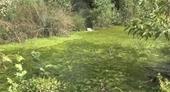 Dừng hoạt động trại Vissan nếu tiếp tục gây ô nhiễm